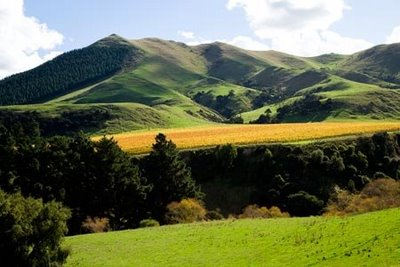 Wairarapa countryside